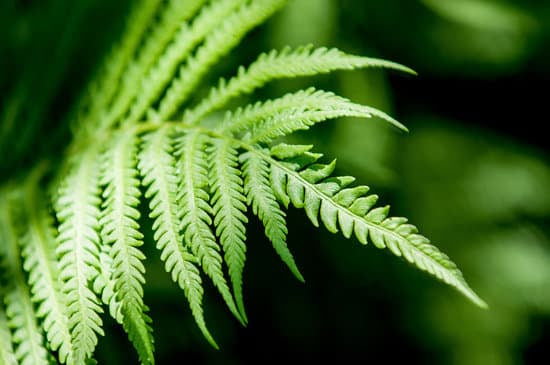 Beloved Fern Flower Essence: Balance + Interconnection + Stillness