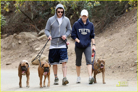 Justin timberlake and dogs