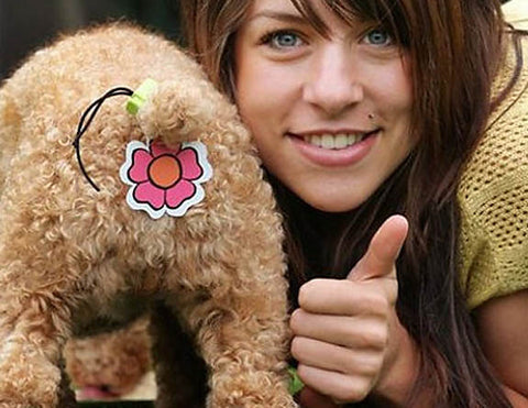worst dog inventions ever