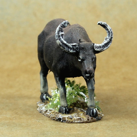 Asian Water Buffalo (ANI001)