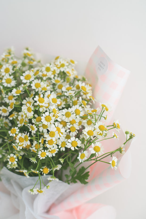 My Lovely Chamomile Bouquet