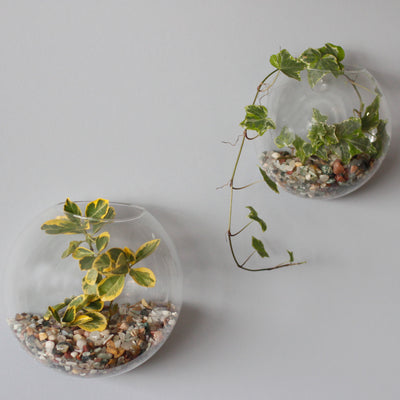 All Glass Terrarium - Large Hanging Wall Bowl - Hipimi