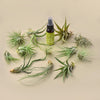 12 Tillandsia Air Plant Variety Pack with Spray Bottle - Hipimi