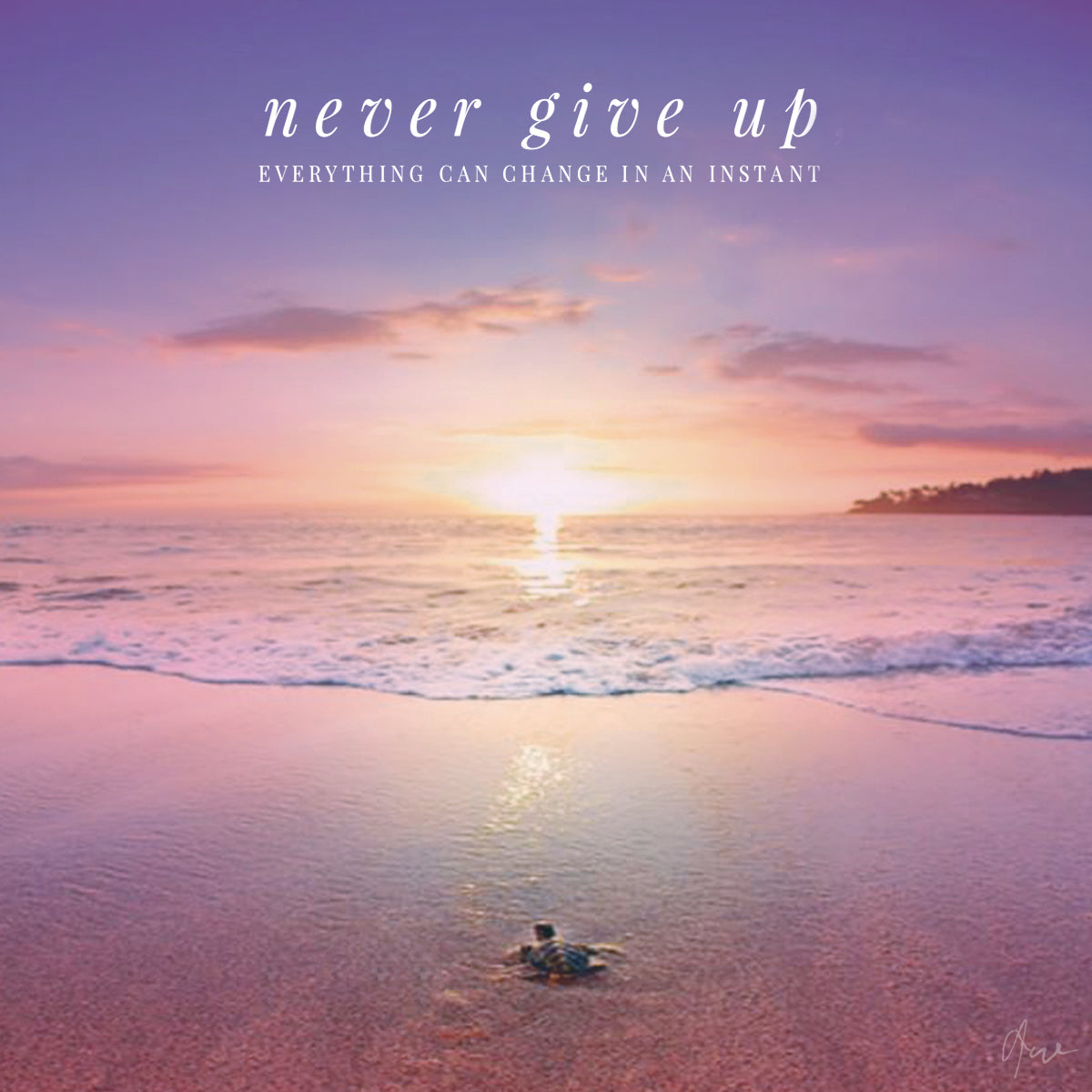Inspiration - Never Give Up | The Honu Collection by Amy Wakingwolf