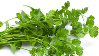 CORIANDER  LEAVES  - BUNCH - Mabrook