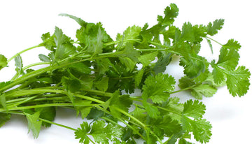 CORIANDER  LEAVES  - BUNCH