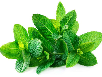 MINT LEAVES  - BUNCH