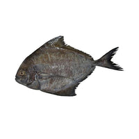 POMFRET BLACK - Mabrook