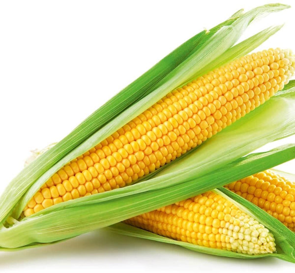 SWEET CORN - SINGLE PC - Mabrook