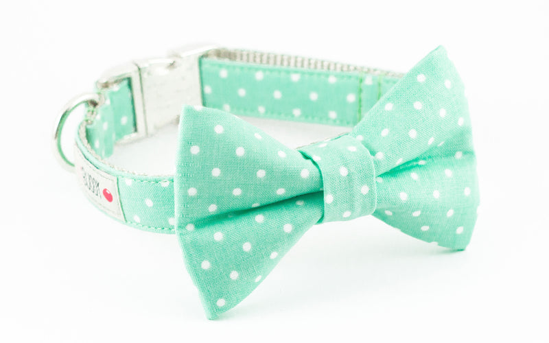 Mint green polka dot dog bowtie collar.