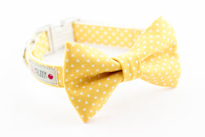 Yellow and white polka dot dog bowtie collar.