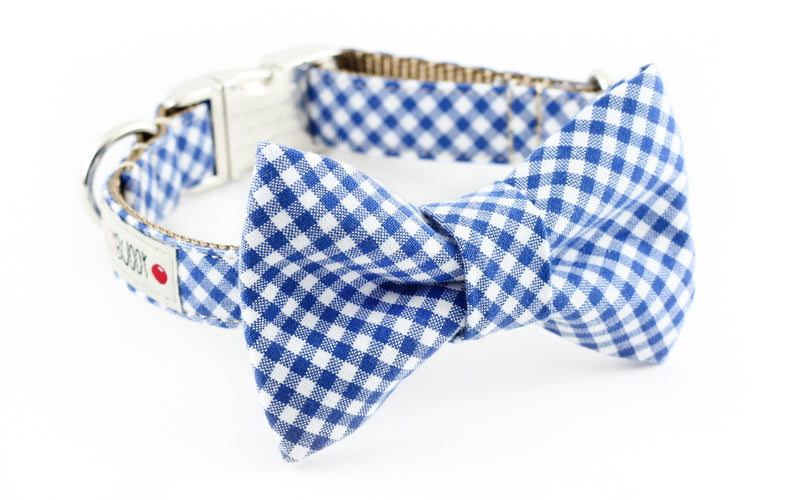 Royal blue and white gingham dog bowtie collar.