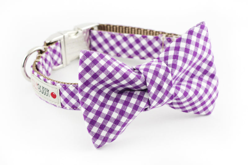Purple and white gingham dog bowtie collar.