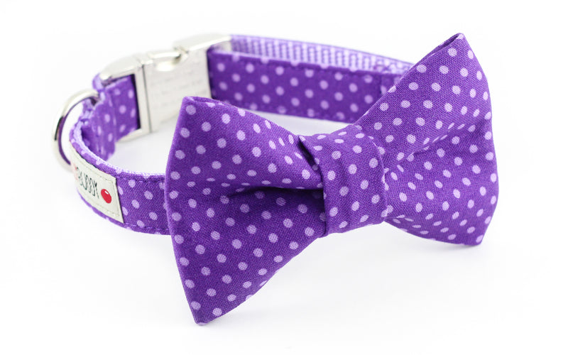 Purple polka dot dog bowtie collar.