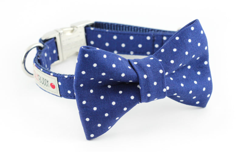 Navy blue polka dot dog bowtie collar.