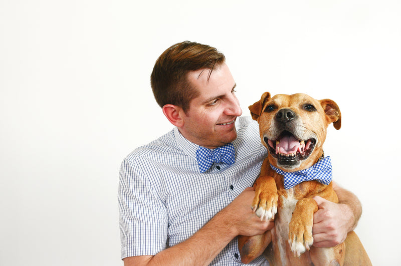 Royal Blue Gingham Bowtie for Human