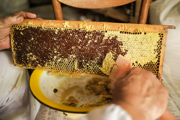 beekeeper preparing to extract raw honey