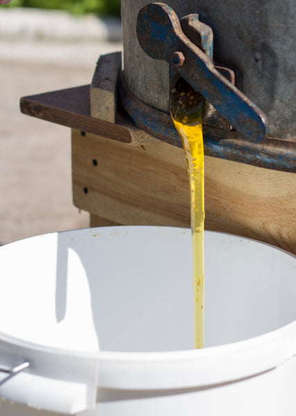 raw unfiltered honey pouring out from a honey extractor
