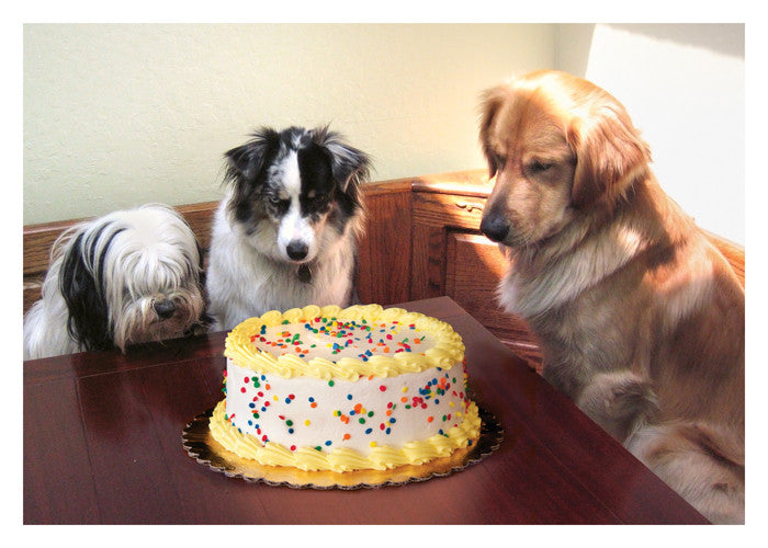 PALM PRESS GREETING CARDS 3 DOGS/CAKE