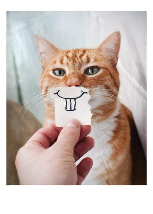 PALM PRESS GREETING CARDS CAT/TEETH