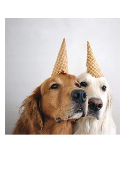 PALM PRESS GREETING CARDS DOGS CONE HEADS