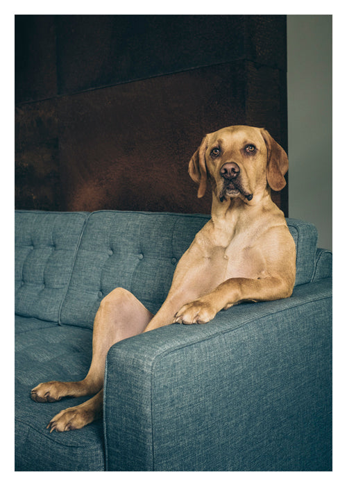 PALM PRESS GREETING CARDS DOG ON COUCH