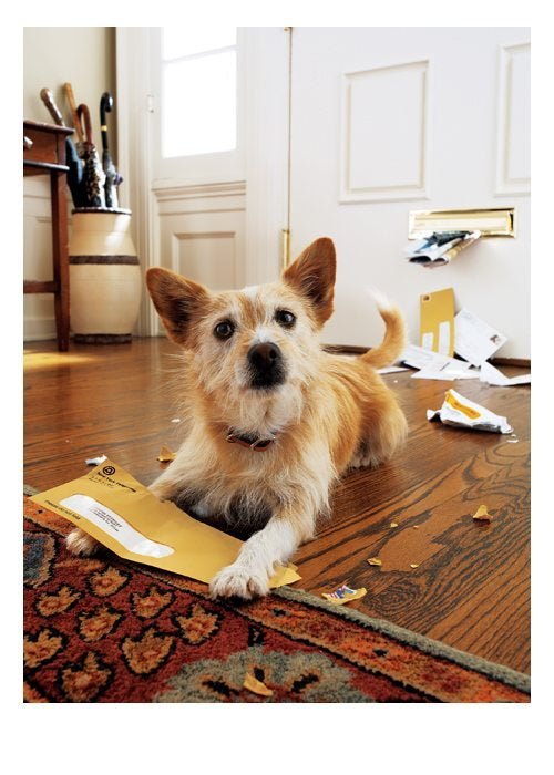 PALM PRESS GREETING CARDS DOG ENVELOPE