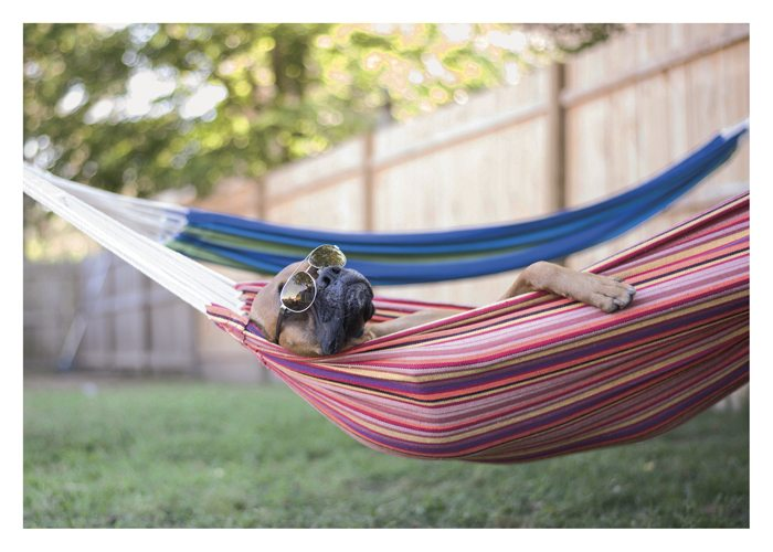 PALM PRESS GREETING CARDS DOG IN HAMMOCK