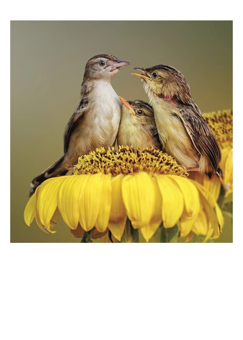 PALM PRESS GREETING CARDS THREE BIRDS SUNFLOWER