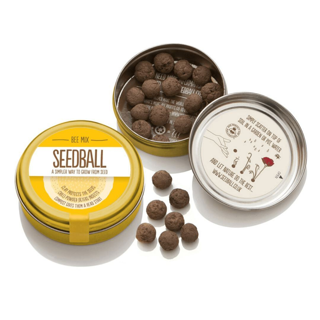 Seedball | Bee Mix Seedball Gift | BoxTree | Send a Gift