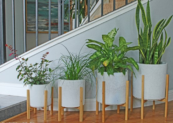 Areca Planter in White Spot