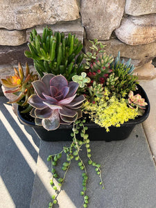 Succulent Combo in oval planter