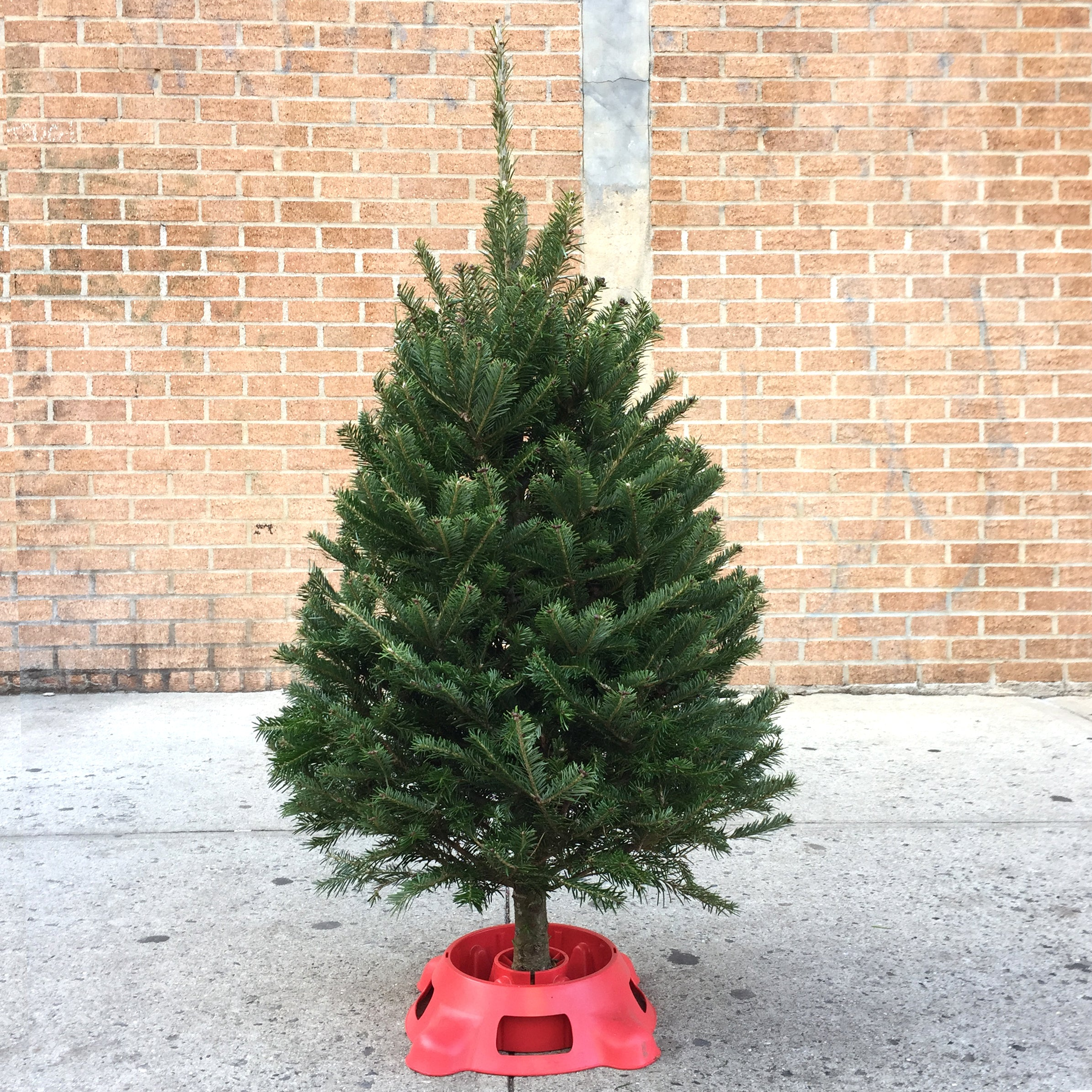 Mini 3'-4' Christmas Tree