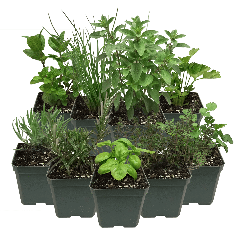 Herb Plant Pack