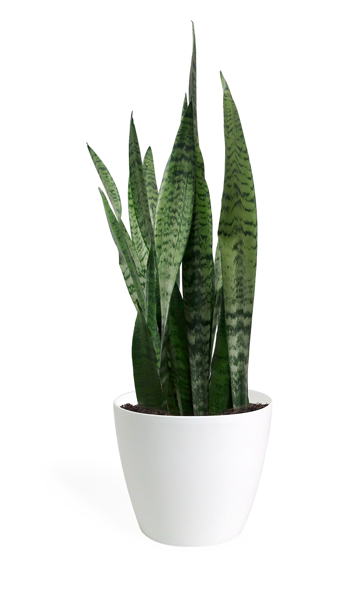 Shop Chelsea Garden Center Houseplants – Page 10