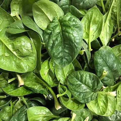 Winter Sweet Spinach