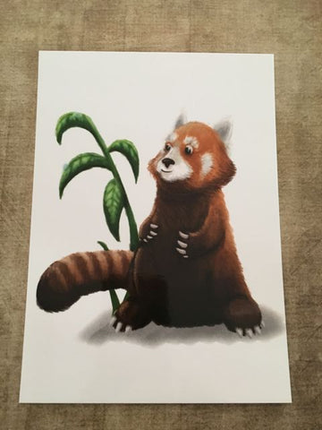 Red Panda Post Card