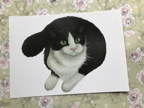 Cats: Black and White Cat Post Card