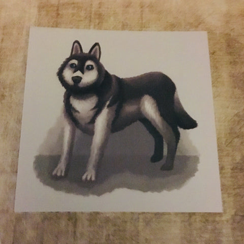 Dogs: Husky Square Post Card