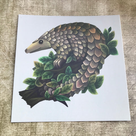 Pangolin Square Post Card