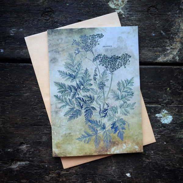 Magical Botanical Poisonous Solanaceae, Hemlock Witching Plant Luxury greeting card.