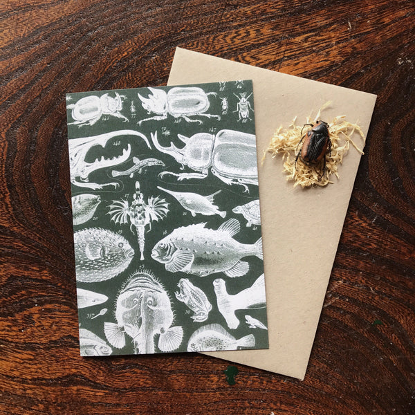 Natural History Vintage Fish & Insects Illustration Luxury Greeting Card.