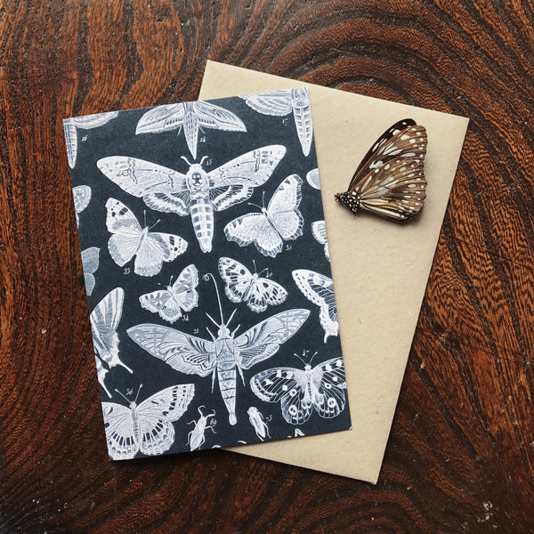 Natural History Vintage Moth & Butterfly Illustration Luxury Greeting Card.