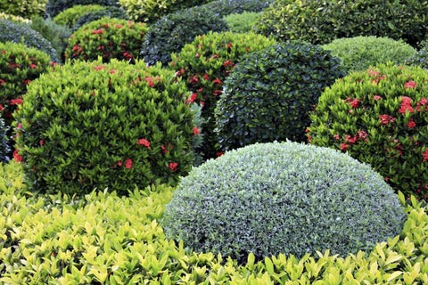 Shrubs and more...