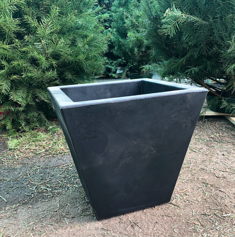 Black Clavel 30 Pot