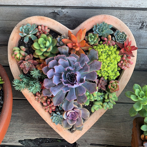 Succulent Arrangement Workshop