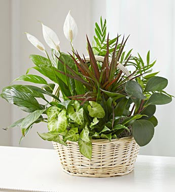 Euro Basket Garden - Green