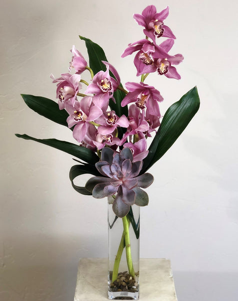 Cymbidium Orchid Beauty