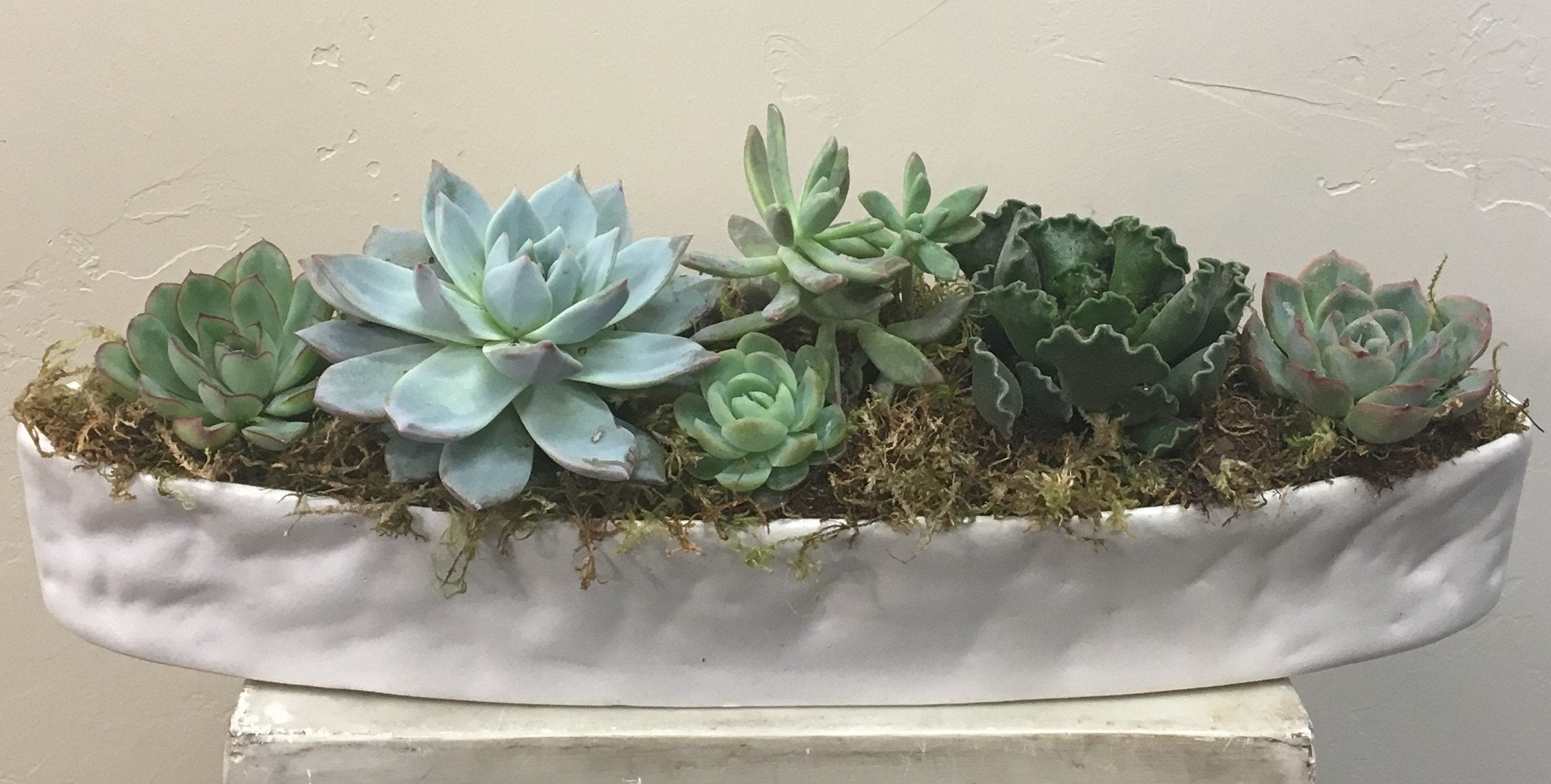 We LOVE Succulents!!