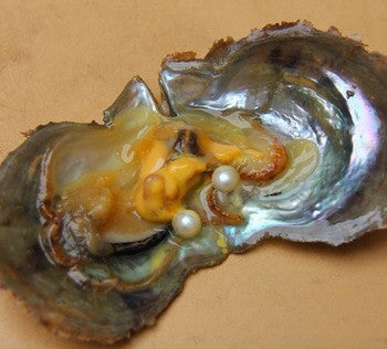 Twin Oyster